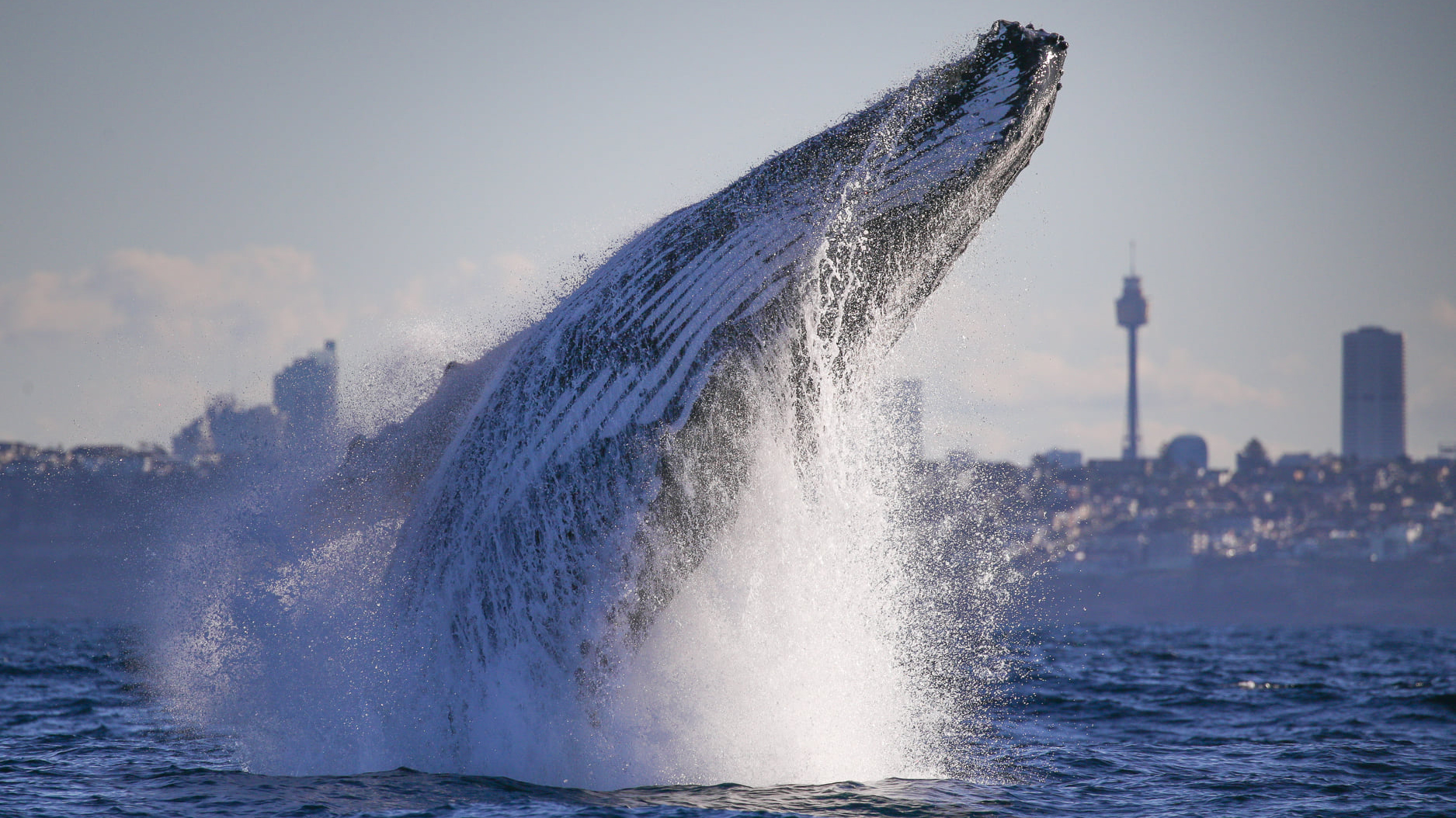 Jet Ski distance rules for whales and dolphins along east-coast Australia